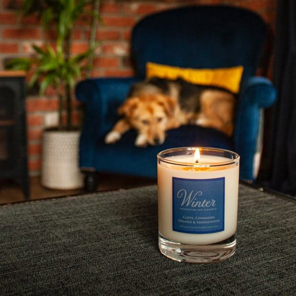 Lit Winter candle with Barry the dog in the background laying on an armchair.